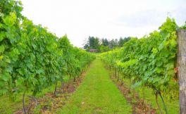 标准化与规模化助葡萄酒庄进一步发展