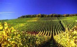 小酒庄出产的葡萄酒贵是有原因的!