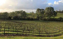 英国10个最美的葡萄酒庄园