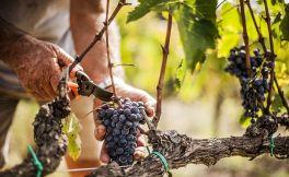 迈宁格国际葡萄酒杂志预测未来25年葡萄酒行业发展趋势