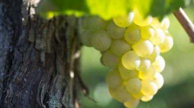 勃艮第葡萄酒协会举办的勃艮第周活动再次登录香港