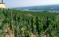 艺术之源酒庄(Chateau Larteau)