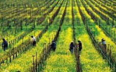 门多萨维纳斯酒庄(The Vines Of Mendoza)