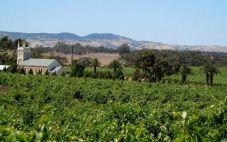 巴罗萨顶级酒庄(Head Wines of the Barossa Valley)