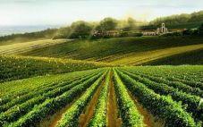 德莫罗德瑞兹葡萄酒公司(Compania de Vinos Telmo Rodriguez)