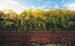 澳大利亚的9个葡萄酒产地