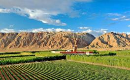 巴州将取消葡萄酒消费税,以促进酿酒葡萄产业发展