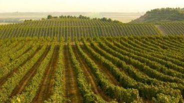 回顾:西班牙顶级红酒LOZANO洛萨诺正式宣布进军中国