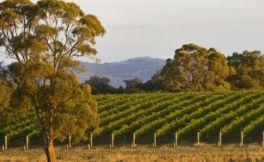 高宝之阶酒庄(Goulburn Terrace Vineyard and Winery)
