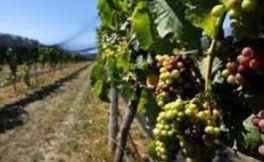 拉蒙特酒庄(Lamont Wines)