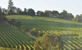 艾瑞酒庄(The Eyrie Vineyards)
