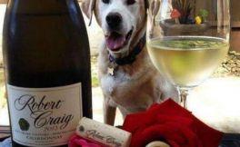 澳洲大狗出版社发行《葡萄酒狗狗》写真集