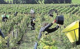 2017年法国酒类出口额增长10亿欧元,再创新高