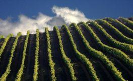 南非的西开普省产区葡萄种植环境