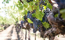 如果你一定要自酿葡萄酒,必需要了解这9件事