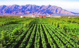 宁夏银川市政府采取六项措施,推动当地葡萄酒行业发展
