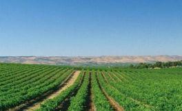 全国人大代表建议新疆天山北麓打造生态酿酒葡萄产业园区