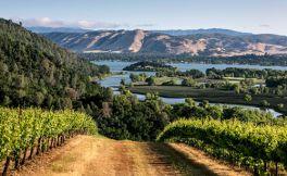 什么影响着葡萄酒的品质?