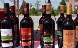 红寺堡产区葡萄酒在中央电视台13套新闻频道《共同关注》栏目上亮相