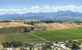 全球酿酒商聚集新西兰葡萄酒小镇马尔堡,学习当地酿酒经验