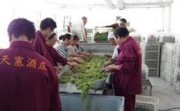 2017年中国葡萄酒产区报告(下)新鲜出炉