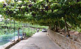 """""""互联网+""""推动传统葡萄产业结构升级转型"""