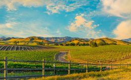 最近7年内,美国葡萄酒出口额首次下滑