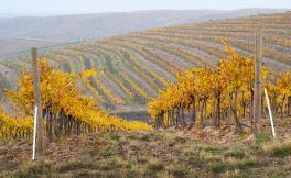 伍德沃德峡谷地产葡萄园介绍