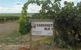 尚普葡萄园介绍 最受欢迎的华盛顿葡萄酒产地