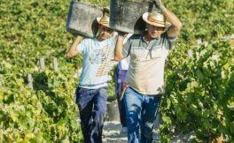 西班牙仍然是全球最大的葡萄酒出口国