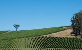专访澳洲葡萄酒管理局中国区总裁卢大卫:澳洲葡萄酒在中国市场面临更多机遇和挑战