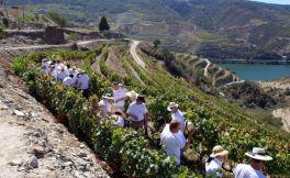 葡萄牙葡萄酒在英国市场的销量日益增长