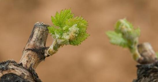 西班牙RiberaRueda联盟品牌将在中国市场开展葡萄酒宣传和推广活动