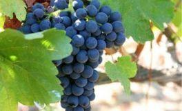 香贝丹是法国夜丘最大葡萄酒村
