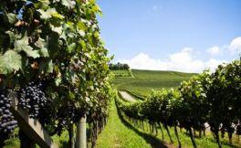 巴西葡萄酒文化的发展历史
