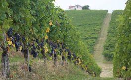 巴罗洛酒商罗伯特-孔特诺收购意大利内维酒庄多数股权