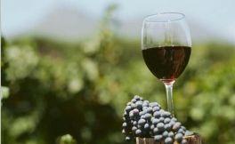 走近澳大利亚霞多丽神奇又美味的葡萄酒