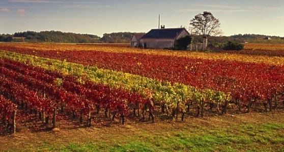 罗纳河谷葡萄酒产区
