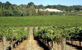 澳洲葡萄酒产区 不容忽视的雅拉谷葡萄酒