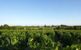 """法国葡萄酒产区 领略""""葡萄酒王国""""的美妙"""