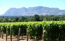 法国葡萄酒庄 盘点法国十大葡萄酒庄
