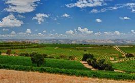澳大利亚葡萄酒 麦克拉伦谷葡萄酒产区介绍