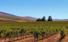 烟台蒂宝莱葡萄酒业(Dibaolai Winery)
