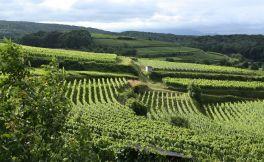 格森纳酒庄(Gesenna Winery)