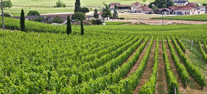 勃艮第(Burgundy)