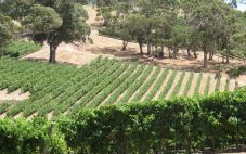 通天酒业(Tongtine Winery)