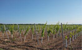烟台阳光海岸葡萄酒业(Sunshine Coast Wine)