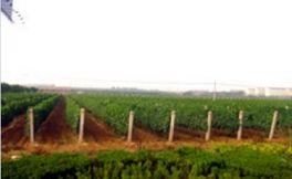 烟台润兴葡萄酒(Pontcity Wines)
