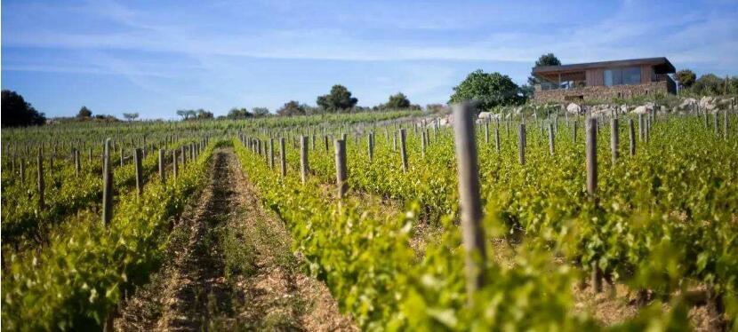 朗格多克(Languedoc)