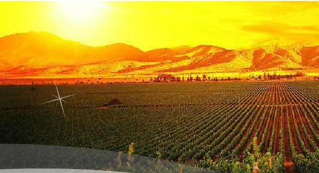 烟台卡斯堡酒业(Casbao Winery)